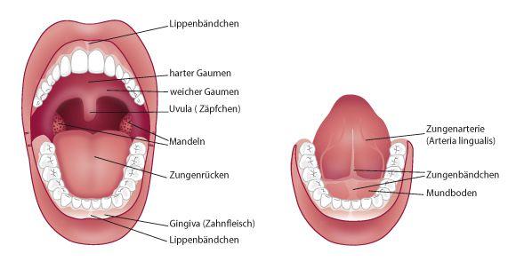 Das Lungenkarzinom